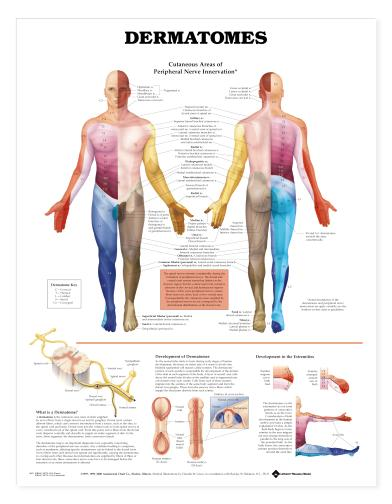 trigger point chart set torso and extremities